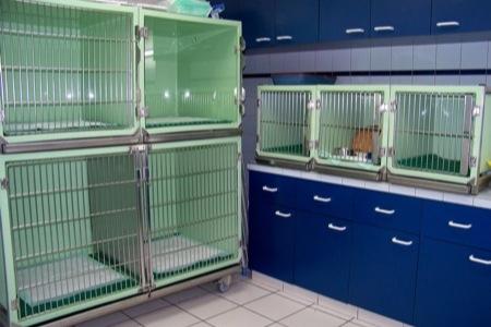 hospitalisation vétérinaire Désertines
