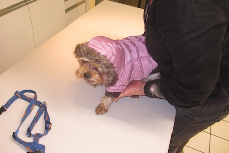 clinique veterinaire chatellerault roc