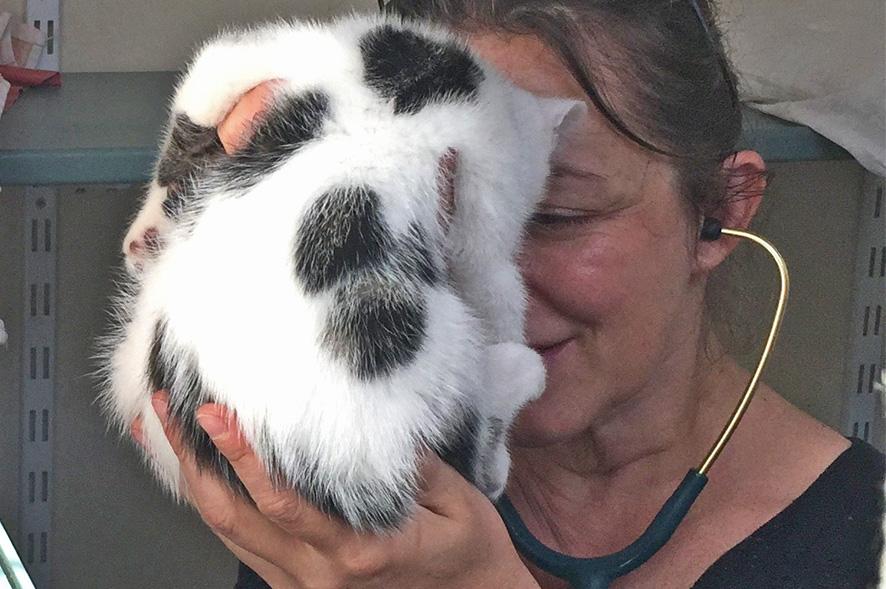 Vétérinaire à domicile Sens