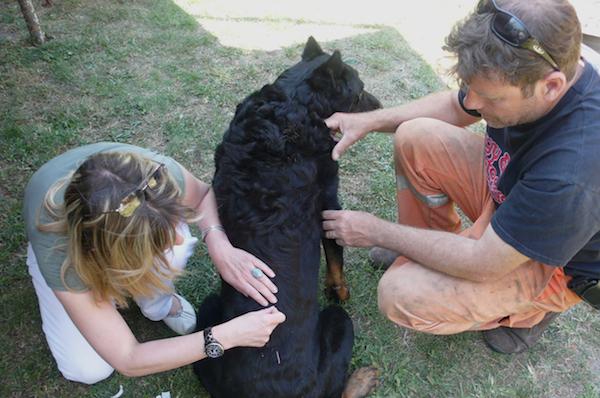 Vétérinaire Sens 89100